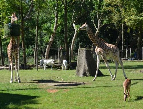 Au Parc Animalier